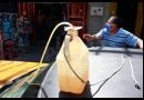 Pandemia versus hambre en Venezuela – PARTE 2